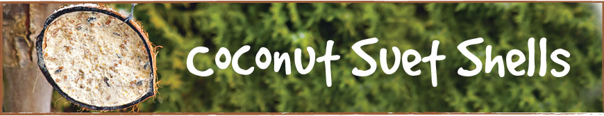 Suet Coconut Shells
