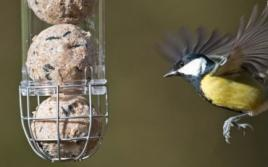 Fat Ball & Suet Feeders