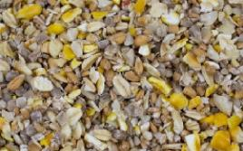 Summer Seed Mixes