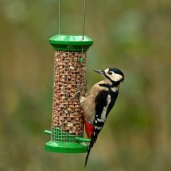 GardenBird Exclusive Premium Peanut Feeder - Medium