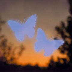 Jacobi Jayne Butterfly Window Alert