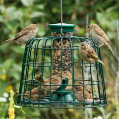 CJ Wildlife Squirrel Resistant Seed Feeders with Guardian - Medium