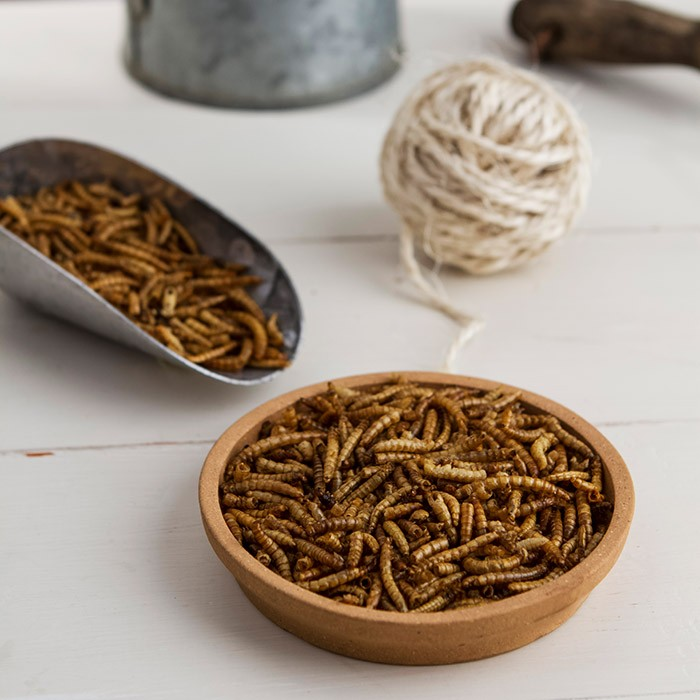 Image of 5Kg Dried Mealworms