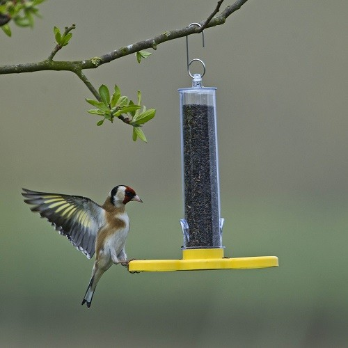 Goldfinch Finder