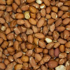Premium Wild Bird Peanuts - Aflatoxin Tested