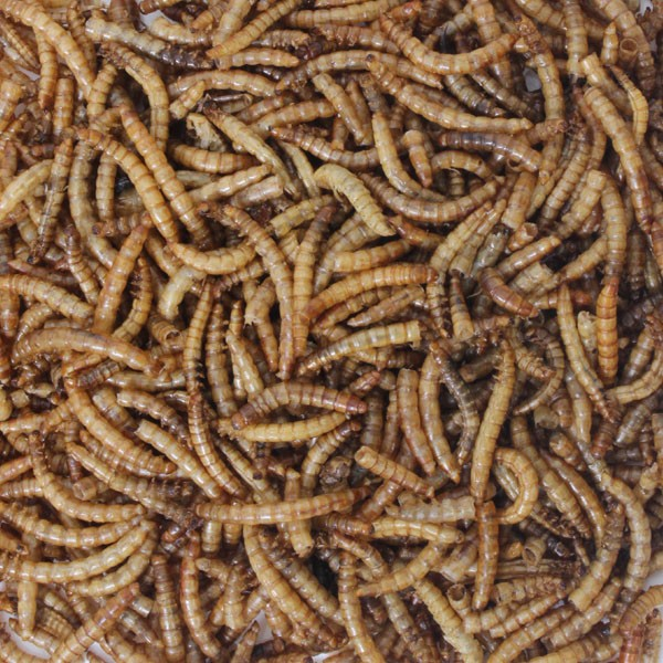 Honeyfields Dried Mealworms