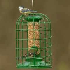 Red Barn Premium Seed Feeder with Guardian