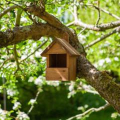 Chapelwood Robin Nest Box Dark Wood