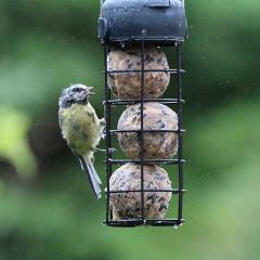 Henry Bell Essentials Wild Bird Fat Ball Feeder