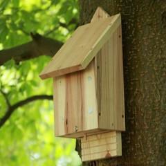 Wildlife World Chavenage Bat Box