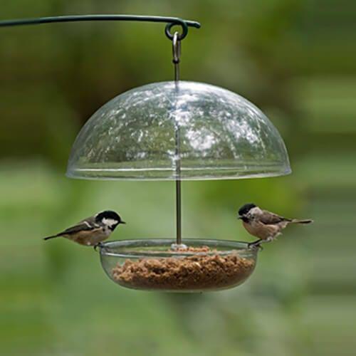 uk's bird feeding guide