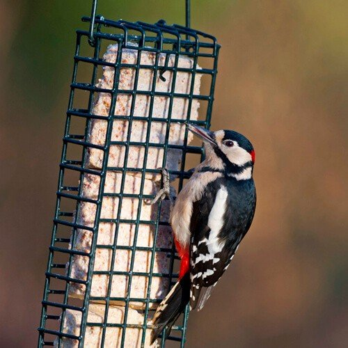 getting started with bird feeding guide