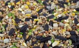 Autumn and Winter Seed Mixes